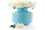 Vase Problem